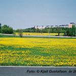 Maskrosängar fotograferat vid nuvarande Kungshörnet/Steninge Allé mot det svängda huset på Tingvallavägen 9